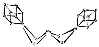 nitrogenáz enzim centrum