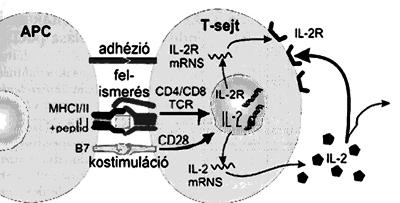 betegség referenciacsoport a helmint fertőzéseknél